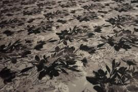 Filc drukowany - szaro-czarne kwiaty